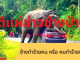 ตีแผ่ข่าวช้างป่า ช้างทำร้ายคน หรือ คนทำร้ายช้าง ตั้งแต่การตั้งแคมป์ที่ผากล้วยไม้ ในอุทยานแห่งชาติเขาใหญ่ จังหวัดนครราชสีมา ที่พลายดื้อ
