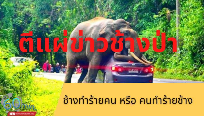 ตีแผ่ข่าวช้างป่า ช้างทำร้ายคน หรือ คนทำร้ายช้าง