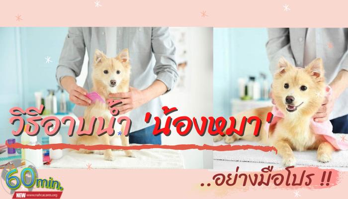 วิธีอาบน้ำน้องหมาอย่างมือโปร