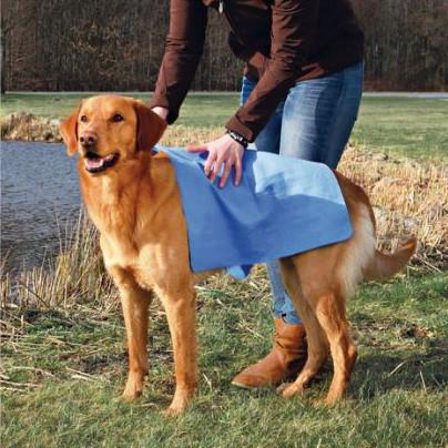 วิธีอาบน้ำน้องหมาอย่างมือโปร ควรอาบอาทิตย์ละครั้ง เนื่องจากการอาบบ่อยจะทำให้ผิวแห้งมากเกินไป จะส่งผลเสียกับสุขภาพน้องหมาได้